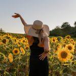 sunflowers, field, flowers